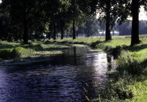 Fluß; Wiese; Wald
